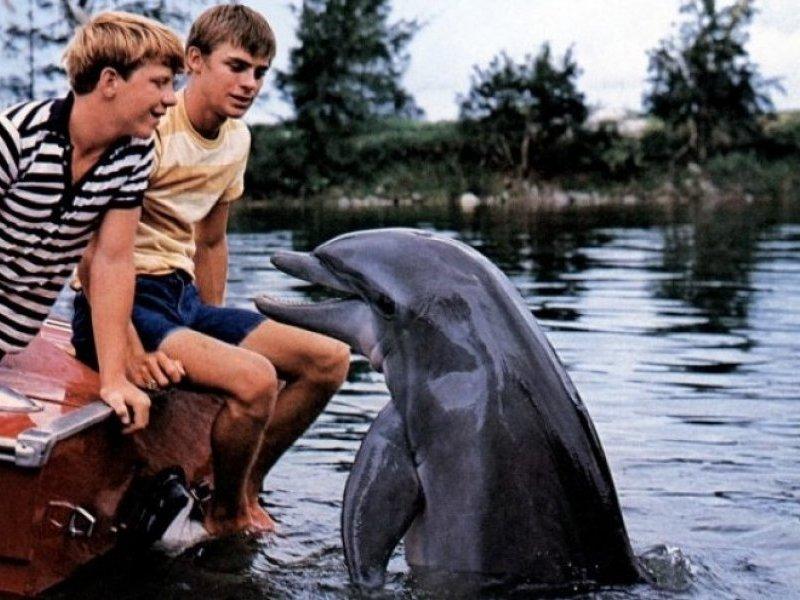 Flipper le dauphin [1964] [S.Live]  Les-je10