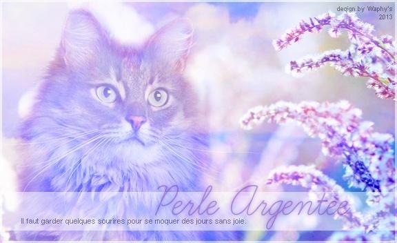 un chat née de l' écumes  Perle_10