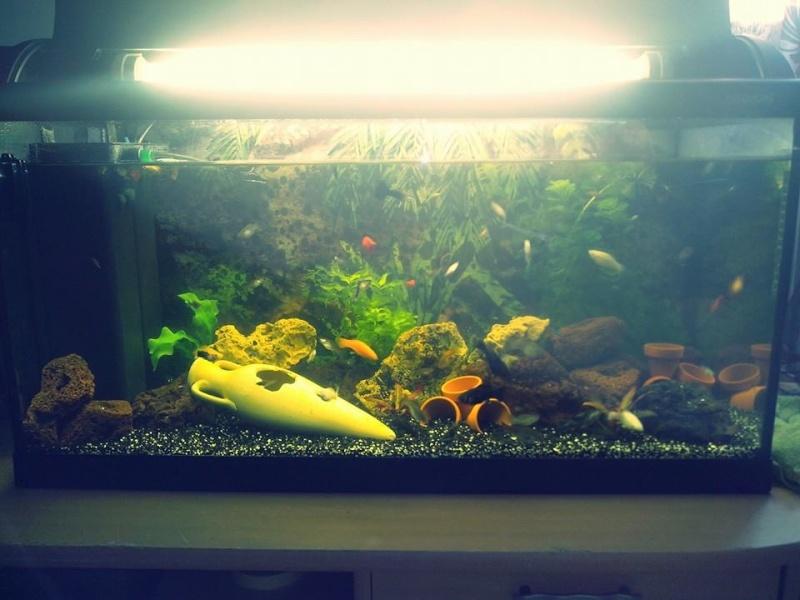 Je vous présente mon aqua'World 112l Aqua11