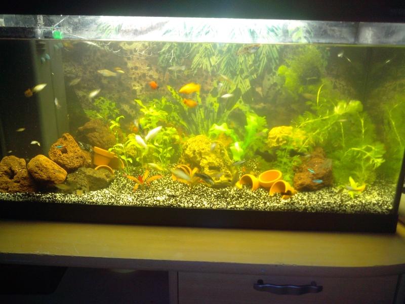 Je vous présente mon aqua'World 112l Img_2012