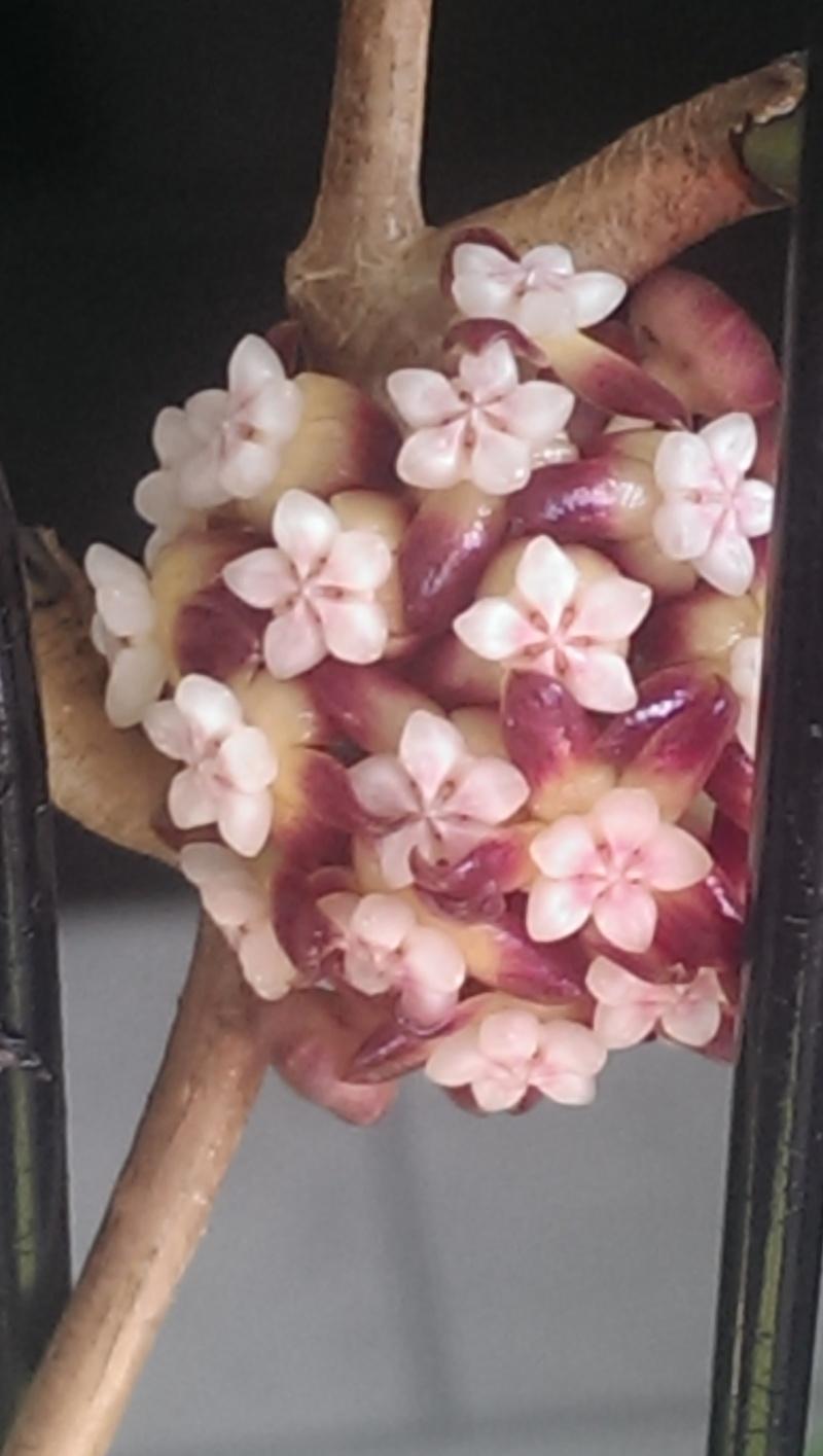 Blüten 2014 - Seite 3 Imag0411