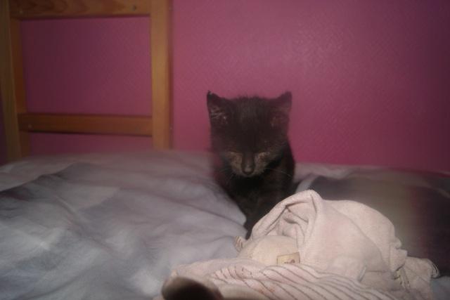 Dora, adorable petite puce aveugle, née mi août 2013 adoptée dans le 59 Dsc04011