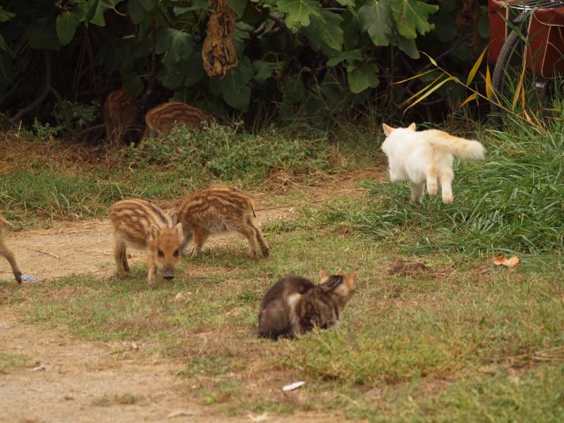 Les 5 petits cochons Pa025710