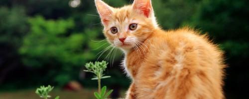 ♣ Nuage de Soleil ♣ Cats-p13