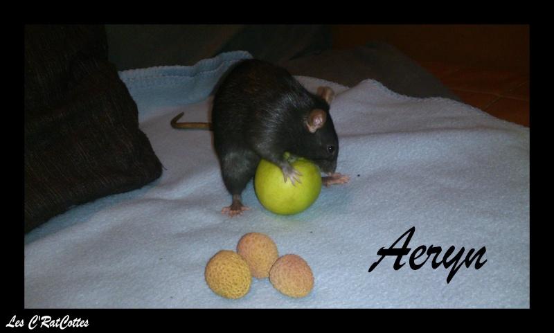 La troupe à Sadako : Les C'RatsCottes !! Aeryn011