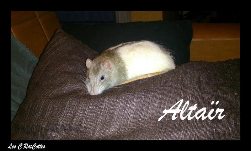 La troupe à Sadako : Les C'RatsCottes !! Altaar12