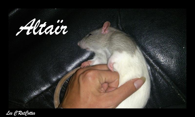 La troupe à Sadako : Les C'RatsCottes !! Altaar13