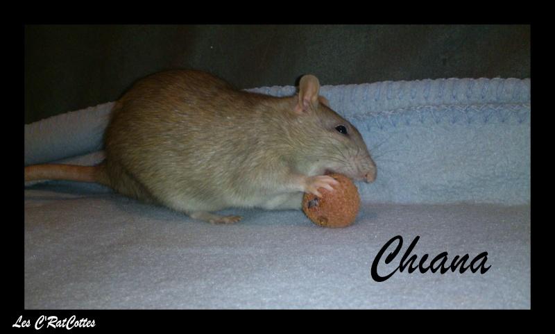 La troupe à Sadako : Les C'RatsCottes !! Chiana10