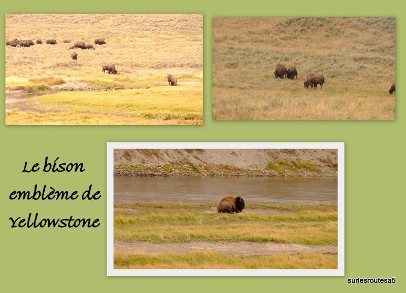 Le Parc National de Yellowstone. 12_yel13