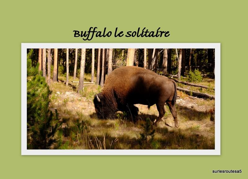 Le Parc National de Yellowstone. 12_yel17
