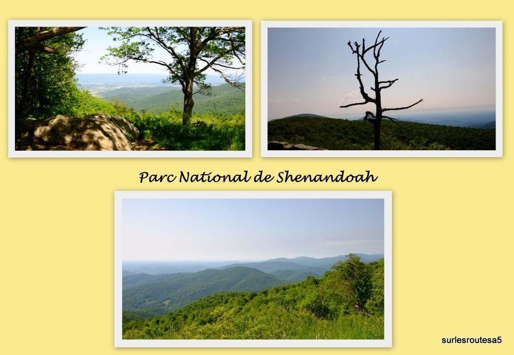 Parc National de Shénandoah. 1shena10