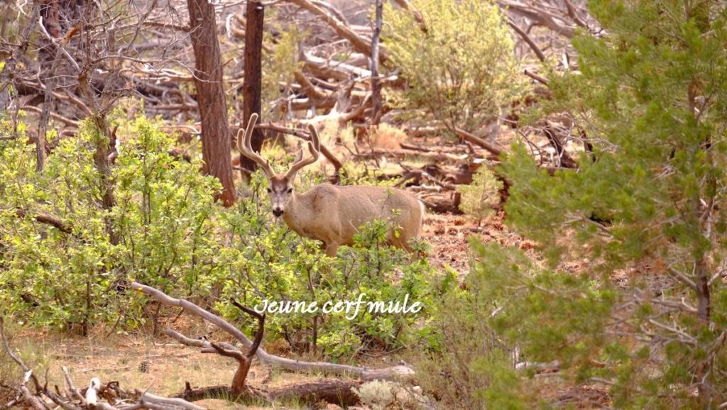 Le 07.06.2018 Flagstaff.Le Grand Canyon.... Dscf0214