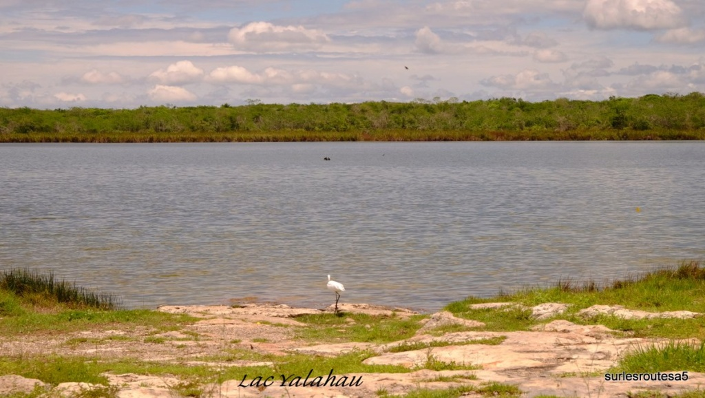 Le Yucatan. Dscf6510