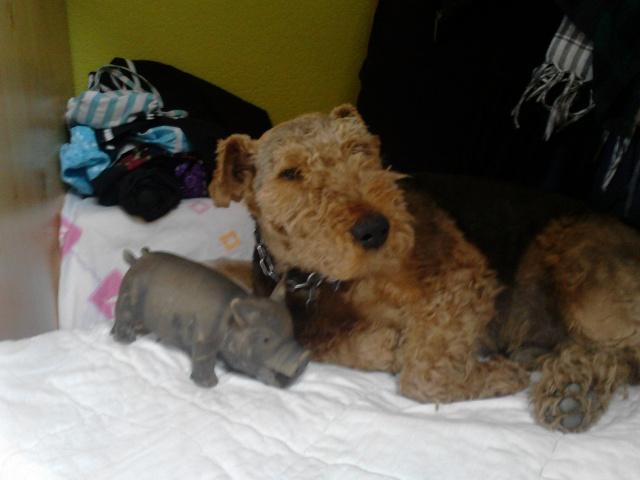 Wie viele Hunde hat das Ratten- und Mäusereich? P3007110