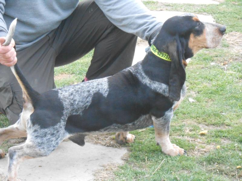 fotos bbg pour la commission d élevage Dscn0212