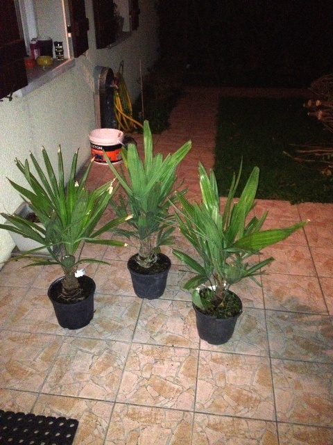 Vos prévision de plantation pour le printemps 2014 Raphi10