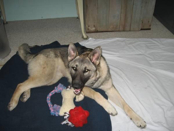 LOST DOG - INDY Germin10