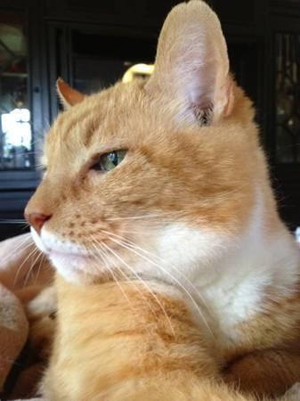 MISSING CAT-HAVERHILL Marcel10
