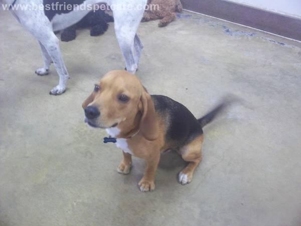 Missing dog- North Bethesda Mddog11