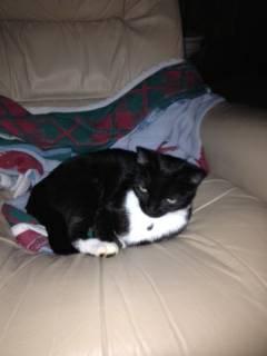 LOST CAT - MINT HILL Nccat610