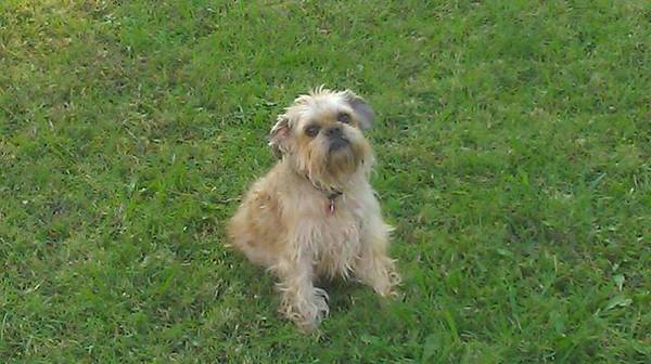 Lost Dog- WT Harris and Idlewild rd Charlotte Ncdog110