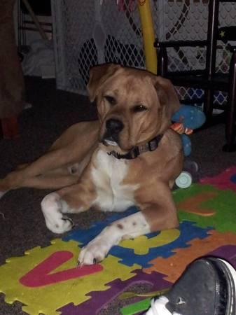 LOST DOG - CHARLOTTE Ncdog310