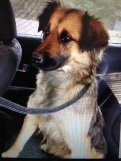 Lost Dog - South Charlotte Ncdog410