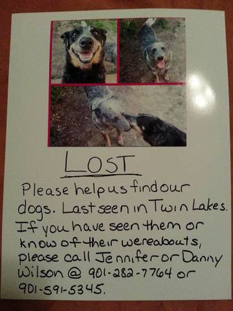 LOST FAMILY DOGS- BLUE HEELER Nmiss210