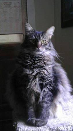LOST CAT- NY Nolaca10