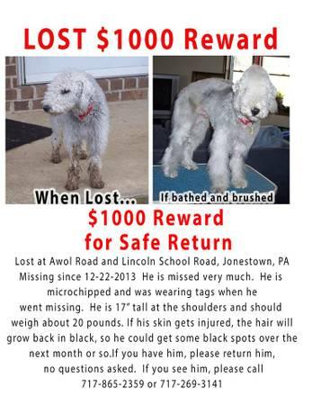 LOST DOG W/REWARD Nydog10