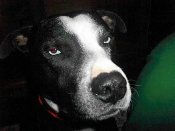 LOST DOG-OHIO Ohioki10