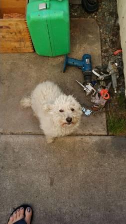 Lost Dog-Reno Renodo14