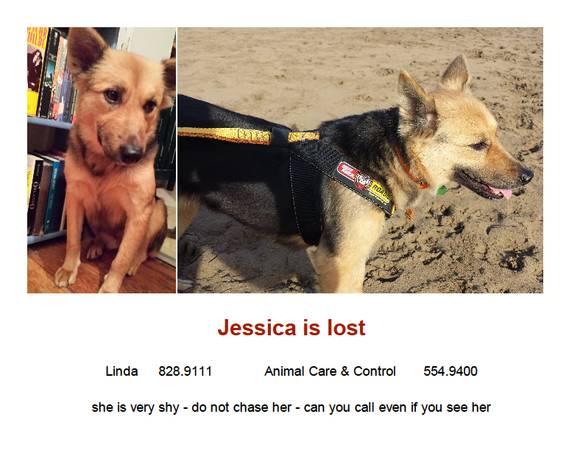 Lost Dog -REWARD Tridog13
