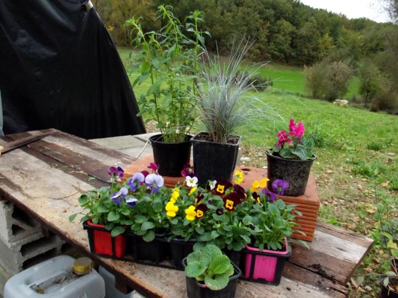 ATELIER création d'une jardinière fleurie de saison Dscf2613