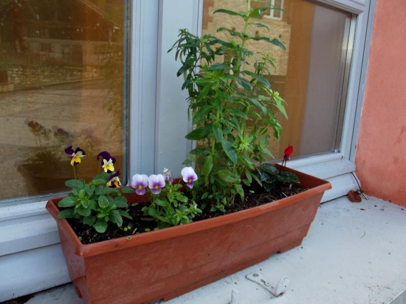 ATELIER création d'une jardinière fleurie de saison Dscf2617