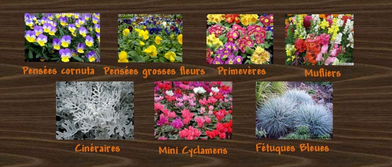 ATELIER création d'une jardinière fleurie de saison Plante10