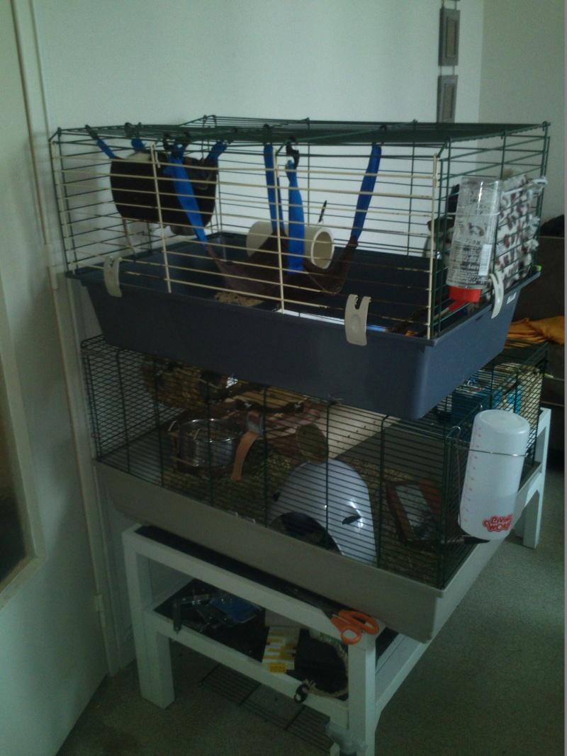 ma cage raffistolage! Dsc_0118