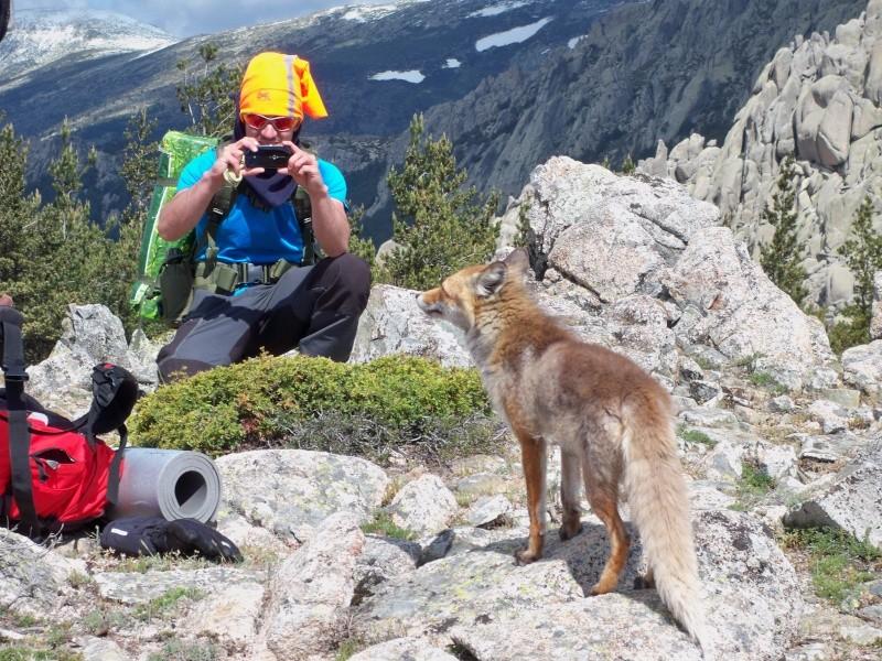 Montañismo: 24 y 25 de mayo 2014 - Integral de la Pedriza (con vivac) 035_pa11
