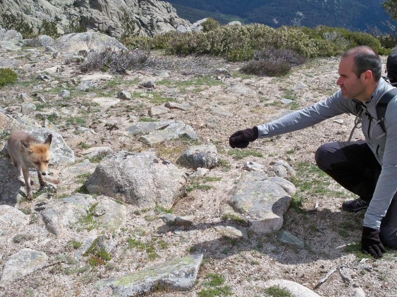 Montañismo: 24 y 25 de mayo 2014 - Integral de la Pedriza (con vivac) 040_ra11