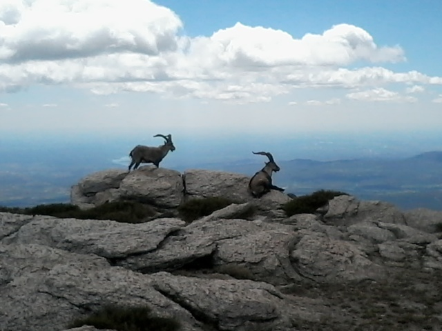 Montañismo: jueves 1 de mayo 2014 - Ascensión al pico Asómate de Hoyos 20140512