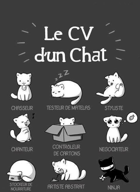 Votre chat c est lequel ? 73380110