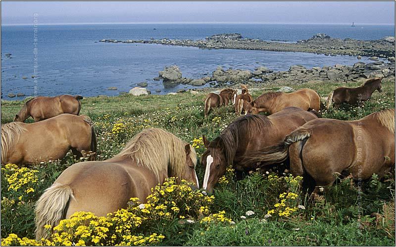 Le cheval breton Photo-10