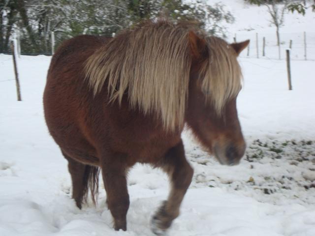 NOISETTE - ONC poney typée shetland née en 2000 - adoptée en juillet 2013 par Patrick  - Page 2 Dsc02417