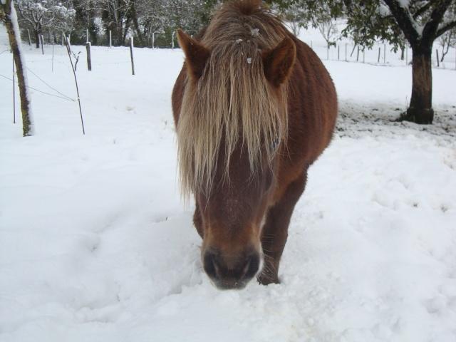 NOISETTE - ONC poney typée shetland née en 2000 - adoptée en juillet 2013 par Patrick  - Page 2 Dsc02420