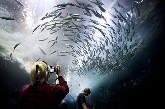 Сан-Франциско Aquari10