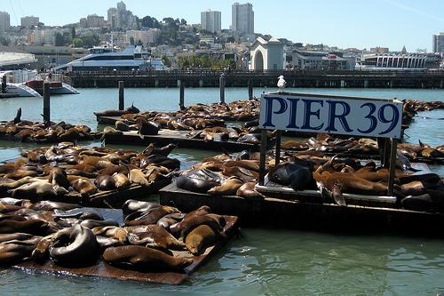 Сан-Франциско Pier10
