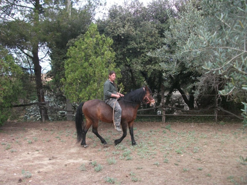 chasse a cheval 15013210