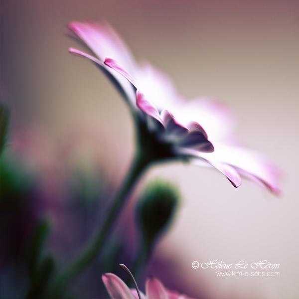 Elégie | Pluie. ♪  Bright10