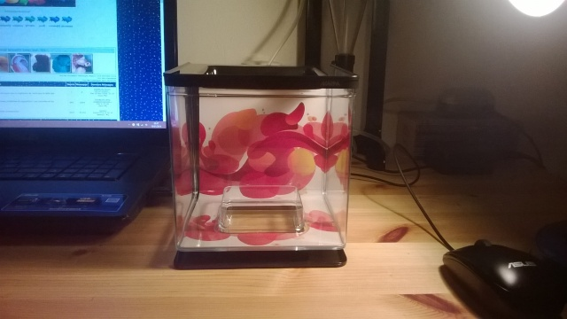 Nouvel aqua (mon 10e)  Aqua10