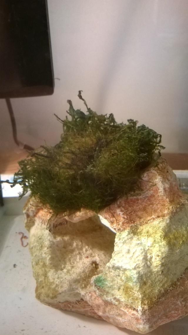 Algues?  Wp_20143